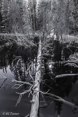 photo shoot, photo ops, swampy, Blue River, Breckenridge, Colorado, landscape photographer, pines, woodlands, monochromes