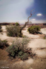 treescapes, landscapes, photographically captured, Moab, Utah, cliffs, deserts, perspectives