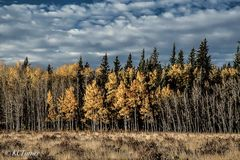 endless wall, aspen trees, open meadow, picturesque, cloud filled, landscape photograph, south park, colorado