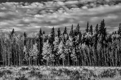 endless wall, aspen trees, open meadow, picturesque, cloud filled, landscapes, black & white photograph, south park, Colorado, pastures, dream
