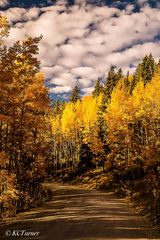 Breckenridge, Colorado, Boreas Pass, Como, meanders, aspens, spectacular colors, photograph, treescapes,