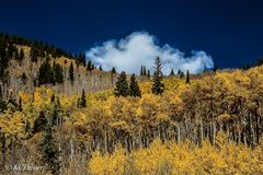 sawmill gulch, north fork, south platte river, west slope, mount evans wilderness, fall colors, colorado, landscape, blue sky, billowing clouds, mountains