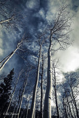 great mountain landscapes, treescapes, deep blue skies, billowing cloud formations, conjure, afternoon nap, woods, blanket, Colorado