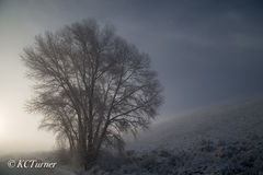 New Mexico, spring, snow squall, storm, delicate pastels, monochromatic, capture, Conejos River