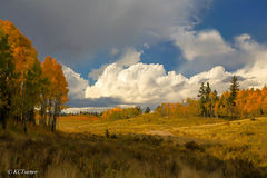 windy, open ranges, forests, Colorado, Lost Creek Wilderness, Pike National Forest, panorama