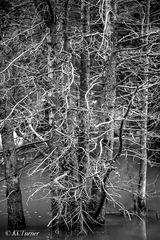 winter, beaver pond, treescapes, waterscapes, photograph, photo shoot, spring, fall, hiking
