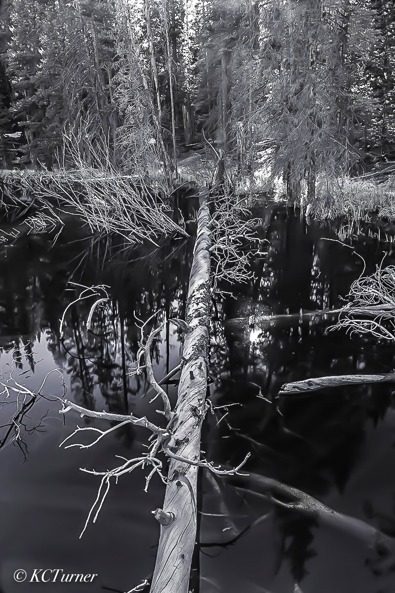 photo shoot, photo ops, swampy, Blue River, Breckenridge, Colorado, landscape photographer, pines, woodlands, monochromes, photo