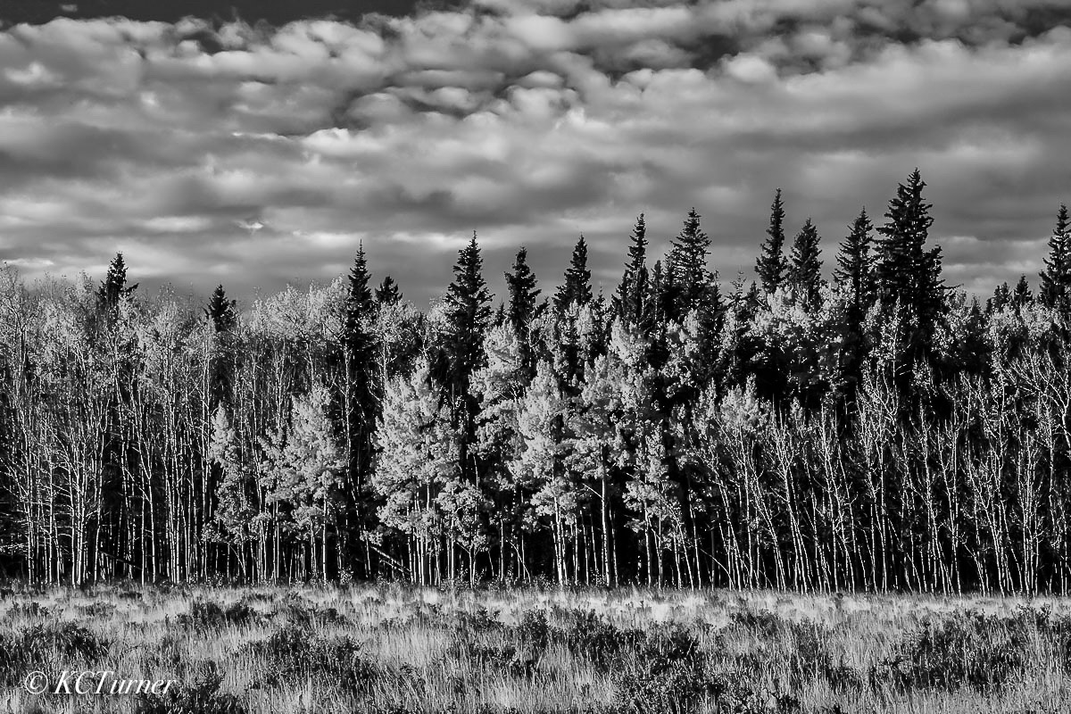 endless wall, aspen trees, open meadow, picturesque, cloud filled, landscapes, black & white photograph, south park, Colorado, pastures, dream, photo