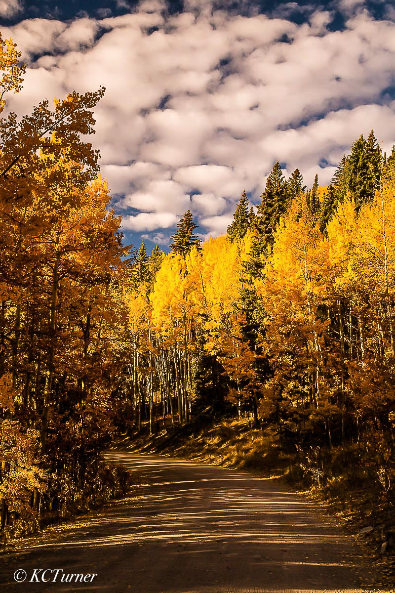 Breckenridge, Colorado, Boreas Pass, Como, meanders, aspens, spectacular colors, photograph, treescapes, , photo