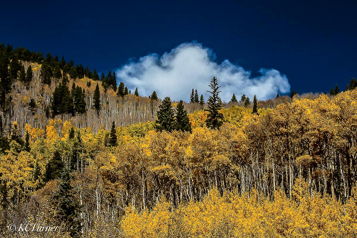 sawmill gulch, north fork, south platte river, west slope, mount evans wilderness, fall colors, colorado, landscape, blue sky, billowing clouds, mountains, photo
