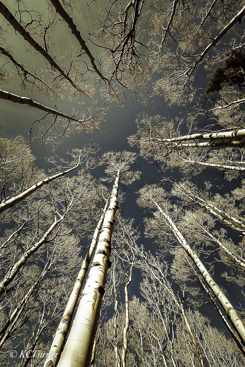 Some times looking up appears the same as looking down as this treescape photograph of a group of Aspens invited me to capture...