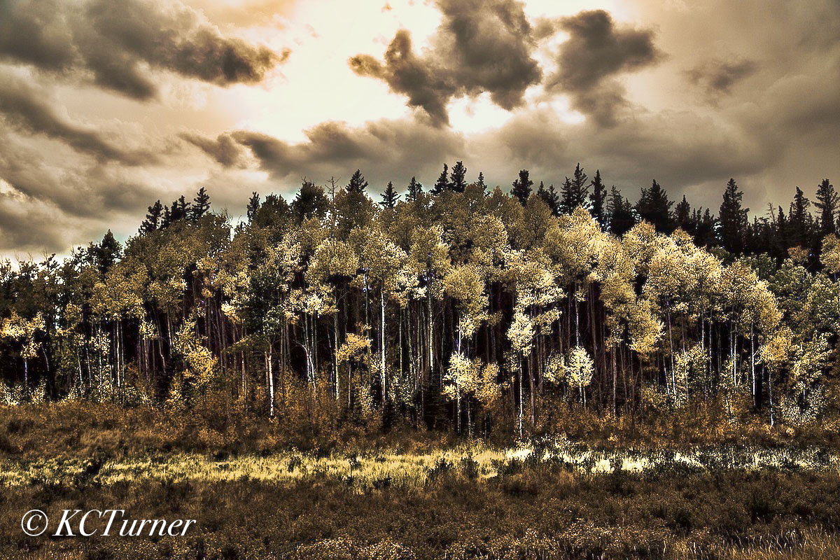 deep attraction, photographing, trees, treescapes, beautiful, ominous, Colorado, skyline, richly textured, clouds, groves, Aspens, photo