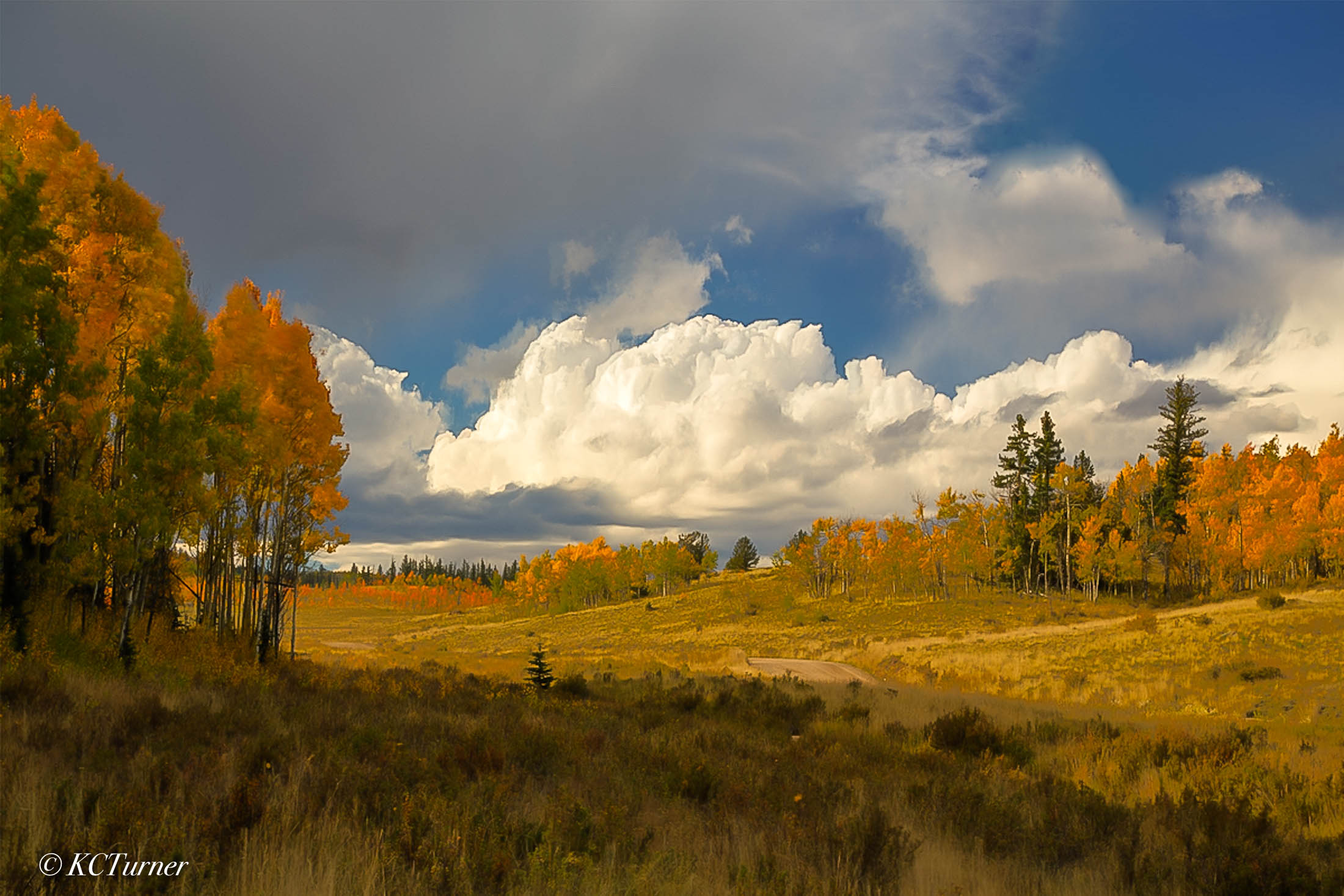windy, open ranges, forests, Colorado, Lost Creek Wilderness, Pike National Forest, panorama, photo