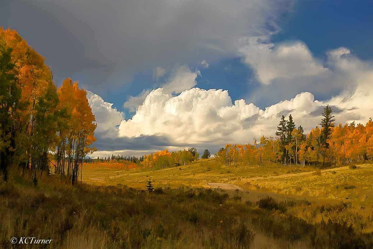 It's not unusual to encounter a windy day in the open ranges and forests of Colorado and this was certainly the case this beautiful...